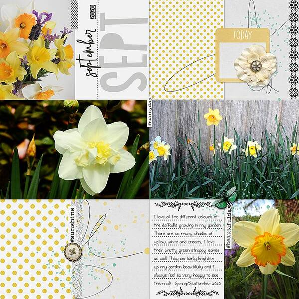 DAFFODILS - SEPTEMBER SPRING - PAGE 1