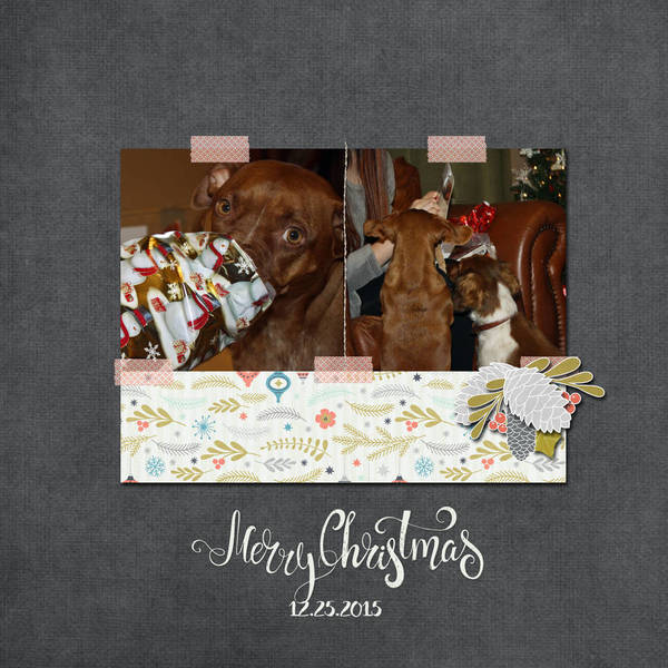 Christmas_presents_for_the_pups