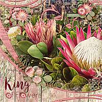 King-of-Flowers-900-303.jpg