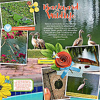 Backyard-wildlife-copy.jpg