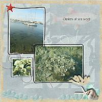 seaweed_photo_chal.jpg